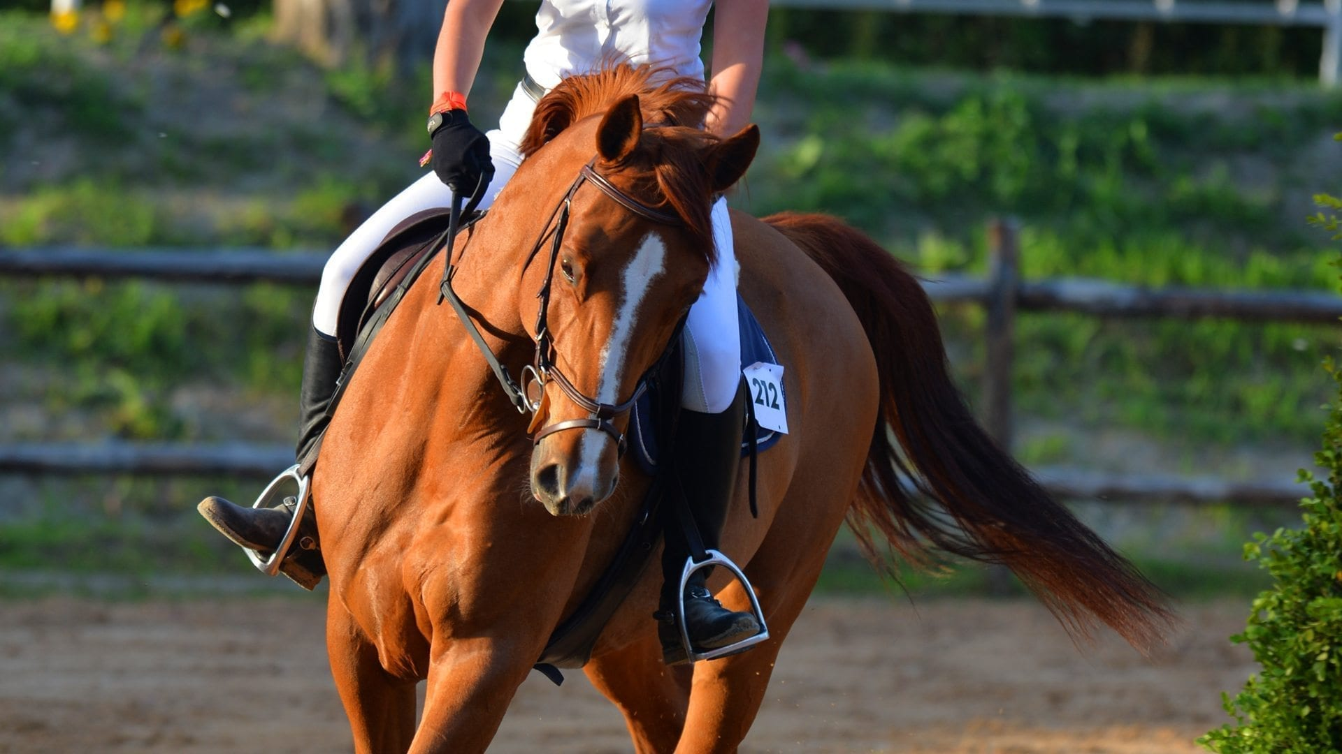 maneggio cavalli sin 03
