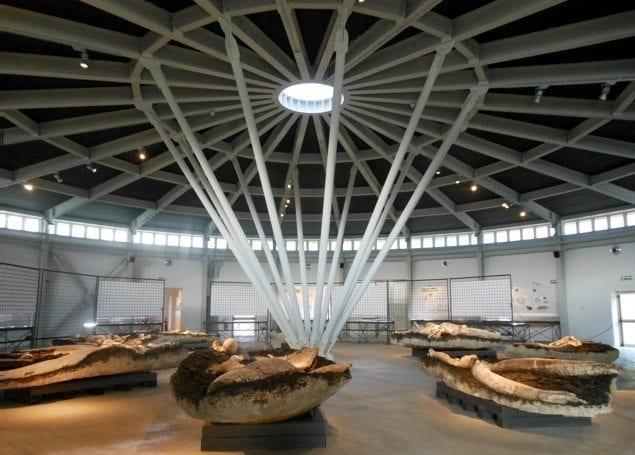 museo paleonotologico